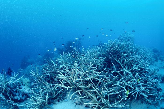 フィリピン珊瑚礁